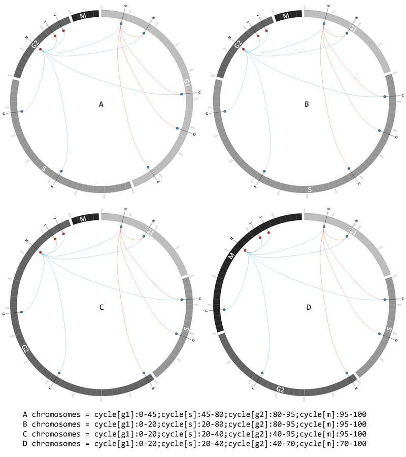 Circos tutorial image - Cell Cycle—Part 2