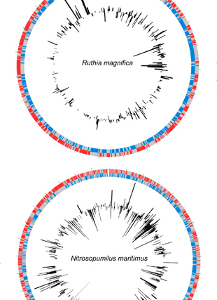 Circular genome visualization and data visualization with Circos: A metagenomic assessment of winter and summer bacterioplankton from Antarctica Peninsula coastal surface waters (310 x 427)