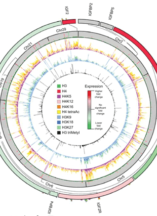 Circular genome visualization and data visualization with Circos: Butyrate Induced IGF2 Activation Correlated with Distinct Chromatin Signatures Due to Histone Modification (310 x 427)