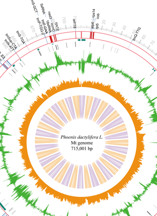 Circular genome visualization and data visualization with Circos: A Complete Sequence and Transcriptomic Analyses of Date Palm (Phoenix dactylifera L.) Mitochondrial Genome (310 x 427)