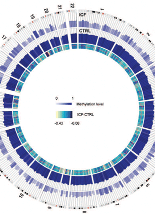 Circular genome visualization and data visualization with Circos: Whole-genome bisulfite DNA sequencing of a DNMT3B mutant patient (310 x 427)