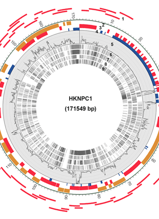 Circular genome visualization and data visualization with Circos: Genomic sequencing and comparative analysis of epstein-barr virus genome isolated from primary nasopharyngeal carcinoma biopsy (310 x 427)