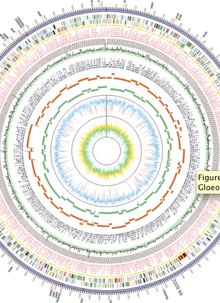 Circular genome visualization and data visualization with Circos: Cultivation and Complete Genome Sequencing of <italic>Gloeobacter kilaueensis</italic> sp. nov., from a Lava Cave in Kīlauea Caldera, Hawai