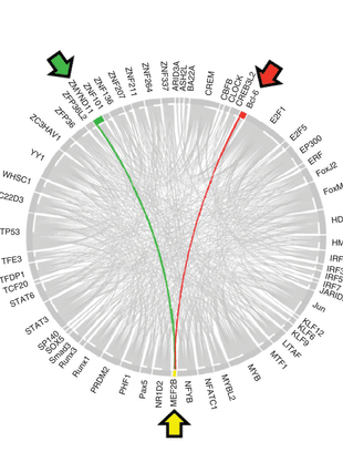 Circular genome visualization and data visualization with Circos: MEF2B mutations lead to deregulated expression of the oncogene BCL6 in diffuse large B cell lymphoma (310 x 427)