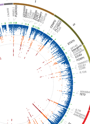 Circular genome visualization and data visualization with Circos: Analysis of immune-related loci identifies 48 new susceptibility variants for multiple sclerosis (310 x 427)