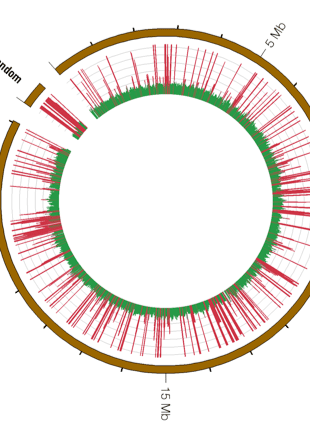Circular genome visualization and data visualization with Circos: Read-depth Methodology for the Analysis of Recent Segmental Duplications in the Grapevine Genome (310 x 427)