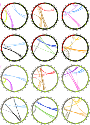 Circular genome visualization and data visualization with Circos: Comparative analysis of rosaceous genomes and the reconstruction of a putative ancestral genome for the family (310 x 427)