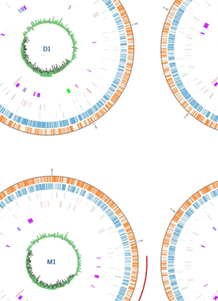 Circular genome visualization and data visualization with Circos: Comparative genomics of Salmonella enterica serovars Derby and Mbandaka, two prevalent serovars associated with different livestock species in the UK (310 x 427)