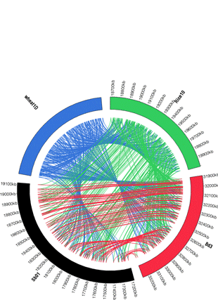 Circular genome visualization and data visualization with Circos: Wheat Zapper: a flexible online tool for colinearity studies in grass genomes (310 x 427)