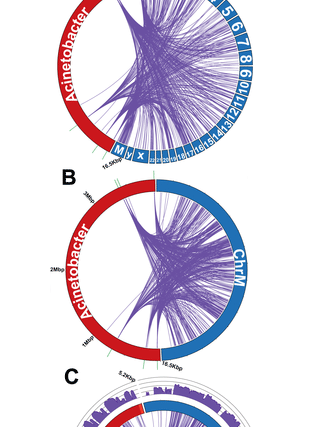 Circular genome visualization and data visualization with Circos: Bacteria-Human Somatic Cell Lateral Gene Transfer Is Enriched in Cancer Samples (310 x 427)