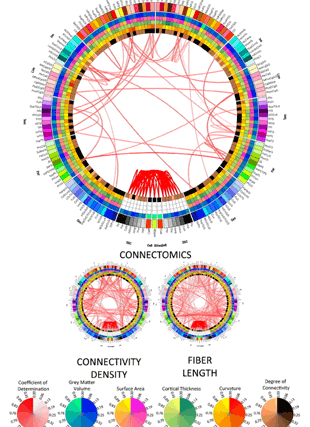 Circular genome visualization and data visualization with Circos: The structural, connectomic and network covariance of the human brain (310 x 427)
