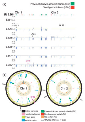 Circular genome visualization and data visualization with Circos: Genomic acquisition of a capsular polysaccharide virulence cluster by non-pathogenic Burkholderia isolates (300 x 427)