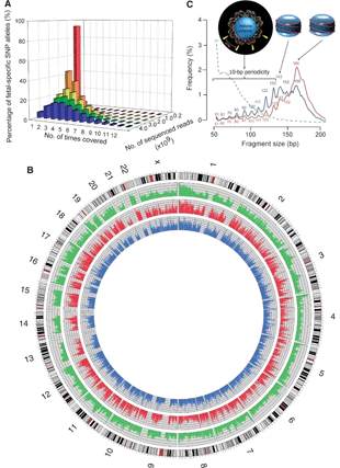 Circular genome visualization and data visualization with Circos: Maternal plasma DNA sequencing reveals the genome-wide genetic and mutational profile of the fetus (310 x 427)