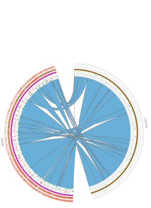 Circular genome visualization and data visualization with Circos: FPSAC: fast phylogenetic scaffolding of ancient contigs (310 x 427)