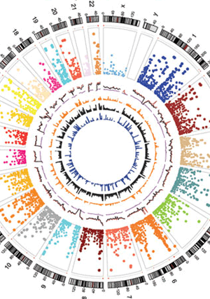 Circular genome visualization and data visualization with Circos: Genetic variants representation, annotation and prioritization in the post-GWAS era (300 x 427)