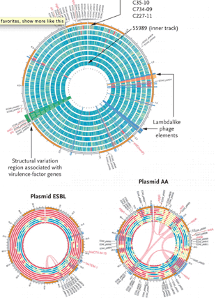 Circular genome visualization and data visualization with Circos: Origins of the E. coli Strain Causing an Outbreak of Hemolytic-Uremic Syndrome in Germany (310 x 427)
