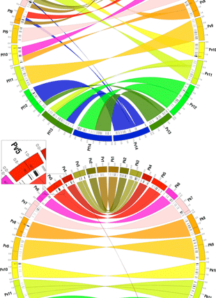 Circular genome visualization and data visualization with Circos: Genome comparison of human and non-human malaria parasites reveals species subset-specific genes potentially linked to human disease (310 x 427)