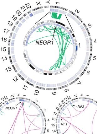 Circular genome visualization and data visualization with Circos: Genomic sequencing of meningiomas identifies oncogenic SMO and AKT1 mutations (310 x 427)