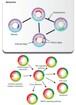 Circular genome visualization and data visualization with Circos: Visualizing multidimensional cancer genomics data (310 x 427)