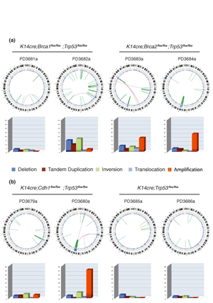 Circular genome visualization and data visualization with Circos: Somatic structural rearrangements in genetically engineered mouse mammary tumors (300 x 427)