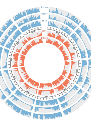 Circular genome visualization and data visualization with Circos: High-throughput genomics in sorghum: from whole-genome resequencing to a SNP screening array (310 x 427)
