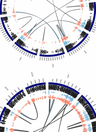 Circular genome visualization and data visualization with Circos: Exploring the genome of the salt-marsh Spartina maritima (Poaceae, Chloridoideae) through BAC end sequence analysis (310 x 427)