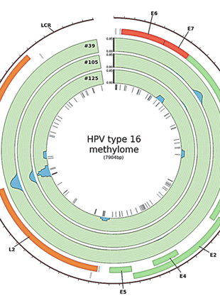 Circular genome visualization and data visualization with Circos: Integrated virus-host methylome analysis in head and neck squamous cell carcinoma (310 x 427)