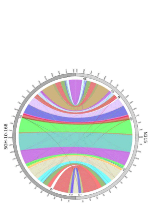 Circular genome visualization and data visualization with Circos: De novo finished 2.8 Mbp Staphylococcus aureus genome assembly from 100 bp short and long range paired-end reads (310 x 427)
