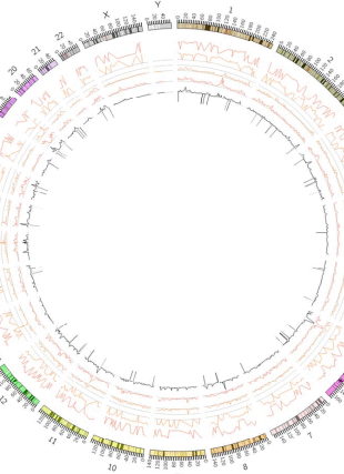 Circular genome visualization and data visualization with Circos: Vitamin D receptor binding, chromatin states and association with multiple sclerosis (310 x 427)