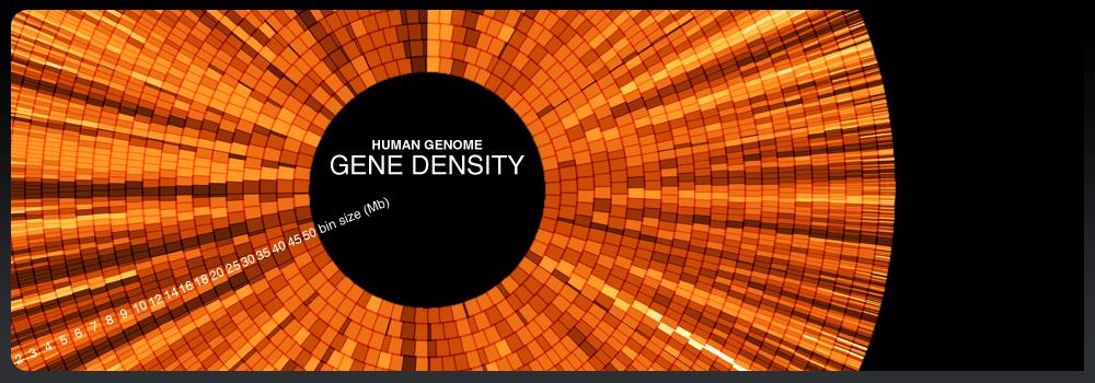 gene zimmer wiki