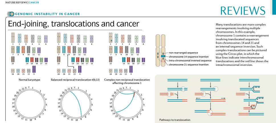 End-joining, translocations and cancer (969 x 433)