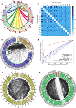 Circular genome visualization and data visualization with Circos: A three-dimensional model of the yeast genome (300 x 427)