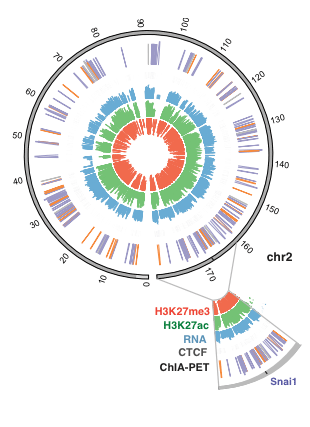 Circular genome visualization and data visualization with Circos: The genomic landscape of cohesin-associated chromatin interactions (310 x 427)