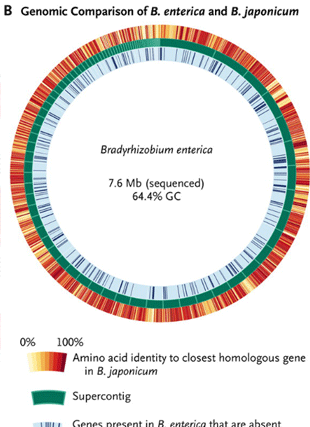 Circular genome visualization and data visualization with Circos: Sequence-based discovery of Bradyrhizobium enterica in cord colitis syndrome (310 x 427)