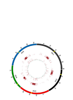 Circular genome visualization and data visualization with Circos: Folate Polyglutamylation Is Involved in Chromatin Silencing by Maintaining Global DNA Methylation and Histone H3K9 Dimethylation in Arabidopsis (310 x 427)