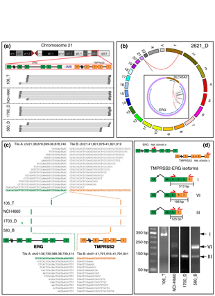 Circular genome visualization and data visualization with Circos: FusionSeq: a modular framework for finding gene fusions by analyzing paired-end RNA-sequencing data (310 x 427)