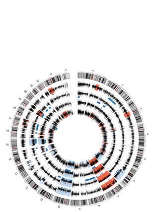 Circular genome visualization and data visualization with Circos: High-resolution mutational profiling suggests the genetic validity of glioblastoma patient-derived pre-clinical models (310 x 427)