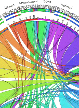 Circular genome visualization and data visualization with Circos: Potential G-quadruplex formation at breakpoint regions of chromosomal translocations in cancer may explain their fragility (310 x 427)