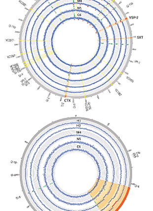 Circular genome visualization and data visualization with Circos: The origin of the Haitian cholera outbreak strain (310 x 427)