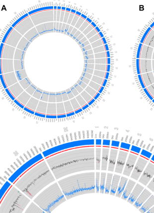 Circular genome visualization and data visualization with Circos: Multiple Mutations in Heterogeneous Miltefosine-Resistant Leishmania major Population as Determined by Whole Genome Sequencing (310 x 429)