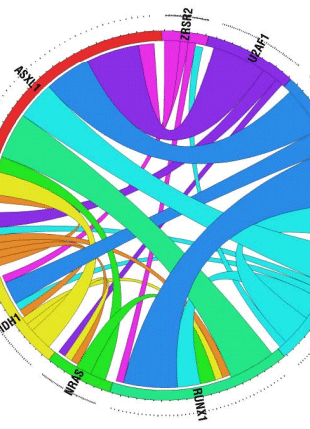 Circular genome visualization and data visualization with Circos: Frequency and prognostic impact of mutations in SRSF2, U2AF1, and ZRSR2 in patients with myelodysplastic syndromes (310 x 429)