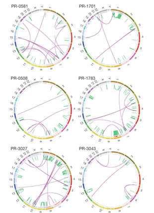Circular genome visualization and data visualization with Circos: The genomic complexity of primary human prostate cancer (310 x 427)