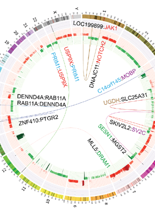 Circular genome visualization and data visualization with Circos: From sequence to molecular pathology, and a mechanism driving the neuroendocrine phenotype in prostate cancer (310 x 427)